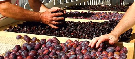 prune et pruneau